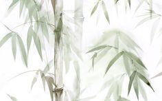 Wallpaper Bamboo forest
