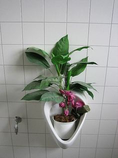 #art #installation #bathroom #plant #feminism