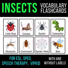This Insect & Bug flashcard set will teach your students vocabulary of 12 common insects/bugs. These are great for word walls or small groups!There are 3 different flashcards sets: labeled with picture cards, non-labeled with picture, and labels only. These flash cards are great for ESL, Speech ... Ell Strategies, Baby Flash Cards, Vocabulary Cards, Picture Cards, Activity Centers, Speech Therapy, Small Groups, Esl, Word Walls