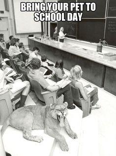 Bring your pet to school…