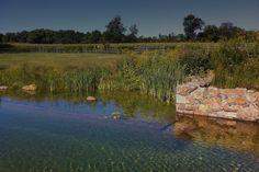 Natural Swimming Ponds | Natural Swimming Pool ‹ Jonathan Alderson Landscape Architects