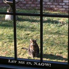 I THINK THE CAT WANTS IN | Content in a Cottage