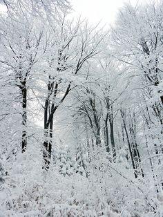 Winter Forest - Děčín, Ústecký, Czech Republic