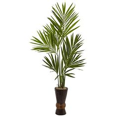 Who likes bamboo? You do! That's why you'll love this Kentia and Bamboo planter combo. Not only is it beautiful, with bright, striking leaves housed in an elegant bamboo planter, but it will add a touch of class to any room that it is placed in, and is sure to be a favorite part of your d¨¦cor. Whether it's in the home or office, it's sure to set a mood of faraway lands and vacations yet taken. Specifications:Height: 6 ft;Width: 34 in;Depth: 24 in;Pot size: H: 17.5 in W: 9 in;Trunk type…