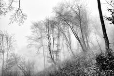 Forest V by ade66 Black and White Photography #InfluentialLime
