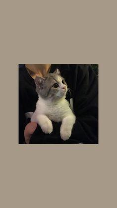 Wallpaper Gatos, Cute Cat Wallpaper, Cute Wallpaper Backgrounds, Animal Wallpaper, Disney Wallpaper, Cute Wallpapers, Cute Baby Cats, Kittens Cutest, Aesthetic Pastel Wallpaper