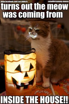 Kitteh Tells a Scary Halloween Story - Cheezburger