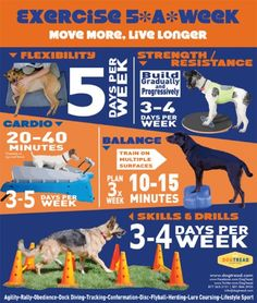 Exercie with your Dog 5 Days a week using Cardio, strength, Flexiblity, balance, skills and drills