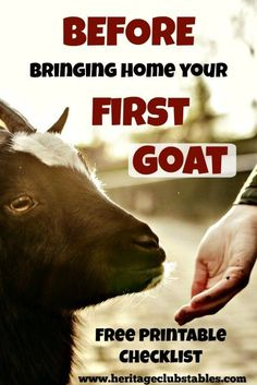 Raising Goats. As your first goat gets settled, you will compile this list and more to keep your goats happy and healthy!