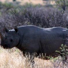 Zimbabwe court hands down heaviest sentence ever to rhino poacher
