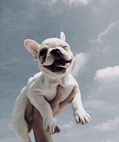 𝕡𝕚𝕟𝕥𝕖𝕣𝕖𝕤𝕥 ✰ 𝕣𝕚𝕤𝕤𝕒𝕛𝕒𝕞 イタリア パグ 犬 🐶 animals dog puppy Cute Little Animals, Cute Funny Animals, Cute Dogs And Puppies, Doggies, Cute Creatures, Puppy Love, Animals And Pets, Fur Babies, Marvel Characters