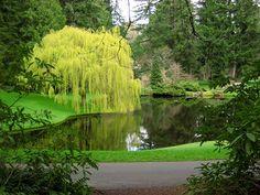 lovely pond The Bloedel Reserve, Bainbridge Island WA
