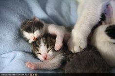 Awww cuteness.