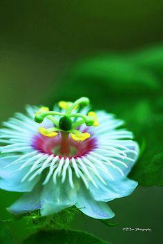Unique Flower | Flickr - Photo Sharing!