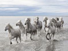 野生の馬、フランス  Wild horse, France