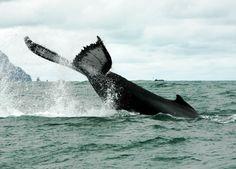 Nuqui Colombia | Avistamiento de ballenas 3 noches 4 dias |