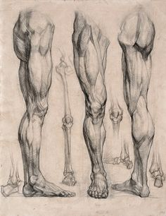 Academic leg drawing - anatomy