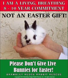 Rabbits are really sweet, loving and intelligent creatures!! We have 3 at our house and they are a ton of work and a major time commitment. Please do not give them as Easter presents!! PLEASE spread the word, for the welfare of all the bunnies out there!!!!