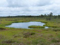 Rabivere Bog, typical habitat.