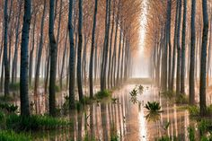 Global Gallery 'Rains Of Spring' by Raffaele Spettoli Photographic Print on Wrapped Canvas Iphone 2g, Macbook Air 11, Artist Canvas, Canvas Art, Canvas Size, Water Flood, Birch Forest, Fill The Frame, Aspen Trees