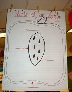 Pencils, Glue, & Tying Shoes: Last Week in Review ... Apples!