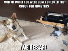 Dog shaming, my dog ate my couch last night #funnydogshaming