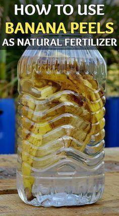 How to use banana peels as natural fertilizer - GardenTipz.com