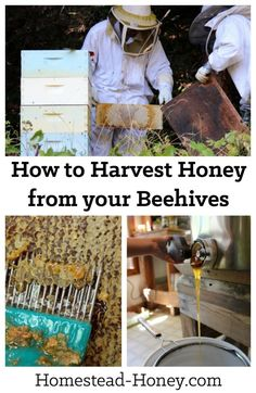 How to harvest honey from your homestead beehives | Homestead Honey