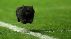 BOM HUMOR : / Um gato interrompe uma partida de rugby e a Internet responde | +MMS