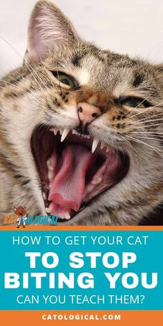 If you're dealing with a fussy kitty that won't stop biting it is more than just annoying. It's downright upsetting and can put off guests, friends and family members from interacting with your fuzzy… Fluffy Kittens, Cats And Kittens, Cats Meowing, Kitty Cats, Cute Cats, Funny Cats, Grumpy Cats, Raising Kittens, Cat Biting