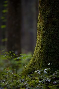 The Enchanted Forest: Little Life by Chris Hatfield Old Trees, Forest Floor, Walk In The Woods, Tree Forest, Woodland Forest, Belle Photo, Amazing Nature, Mother Nature, Nature Photography
