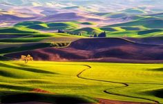 Les collines de la Palouse - État de Washington