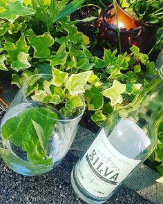 Sommerfrische Drink von der Rax auch im Wein4 mit Bio Gin vom Nachbarn. @silva_der_verjus_drink #silvadrink