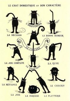 LEARN FRENCH #CATS #FRENCH