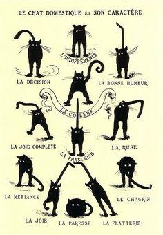 Les caractères d'un chat