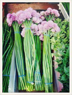 140 Best Farm to Fork images in 2016 | Vegetables garden