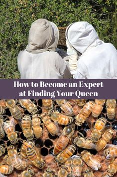 Finding the queen bee in a hive can be challenging. Discover what to look for to find your queen bee without using the crutch of marking it. Mason Bees, I Love Bees, Bee Farm, Bees And Wasps, Hobby Farms, Busy Bee, Bees Knees, Queen Bees, Bee Keeping