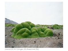 These Are Some of the Oldest Living Things on Earth | Science | WIRED