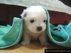 Oh! I love this little puppy! its so cute