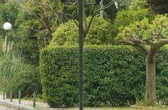 Δένδρα και θάμνοι που αντέχουν στην ξηρασία