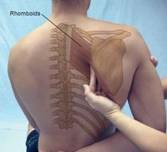 Human Body Anatomy, Human Anatomy And Physiology, Muscle Anatomy, Massage Tips, Massage Benefits, Massage Therapy, Foot Massage, Stone Massage, Thai Massage