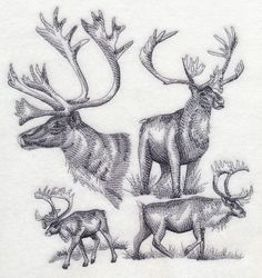 CARIBOU SKETCH - Machine Embroidered Quilt Block (AZEB)