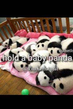 Hold a baby panda!!! :)) please!<3 BUCKET LIST!