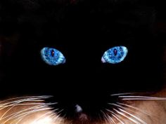 Google Image Result for http://allyouneedtoknow.org/wp-content/uploads/2011/05/beautiful-cat-eyes.jpg