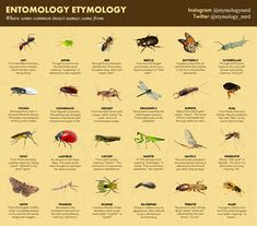 Infographics - THE ETYMOLOGY NERD Insects Names, Set A Reminder, Work Images, Nature Study, Old English, How To Stay Healthy, Infographics, How To Make, Popular Cheeses