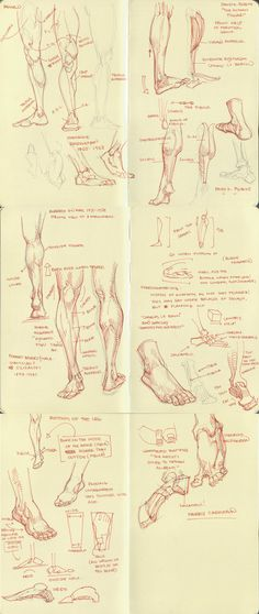 anatomy dump 2 by ~kakimari on deviantART ✤ || CHARACTER DESIGN REFERENCES…