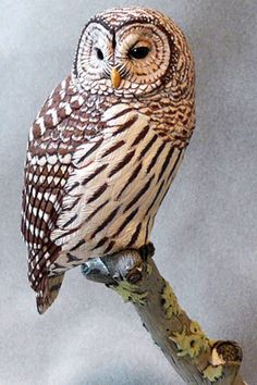 Barred Owl - Tim McEachern, Bird Carver  Some incredible wood carvings of different species of birds