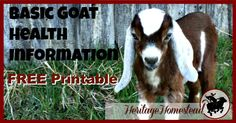 FREE Basic Goat Health Information, Upkeep and Health Tracker Printable. Keep track of your goats information on a regular basis.