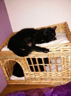 Selber-Macherin: Katzenbett und Katzenhaus Produktempfehlung
