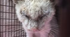 """""""Blind"""" Stray Cat Surprises Rescuer After Revealing Incredible Beauty Of His Eyes 
